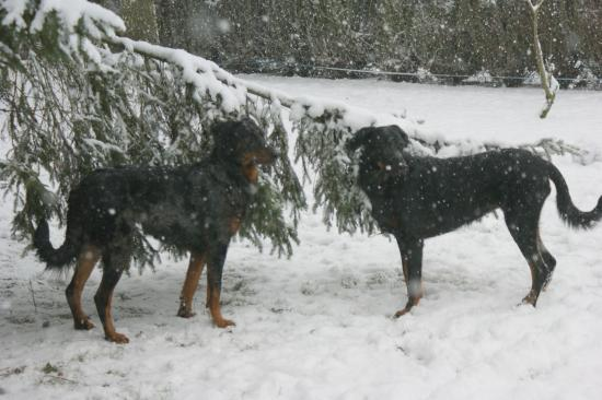 Dans la neige : 19 déc 2010